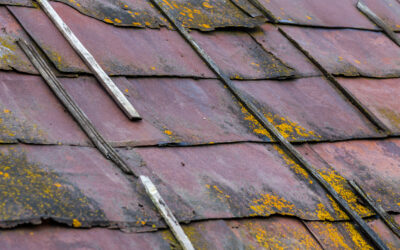 No Homeowner Wants Mold to Take Hold! Regular Roof Maintenance Stops Mold in its Tracks!