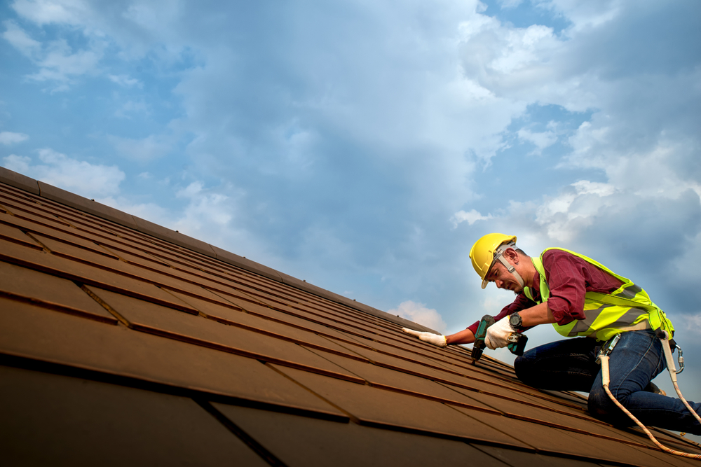 Is your roof under attack?! Regular maintenance can target pests that are out to get your roof before it's too late!